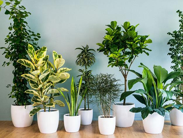 Ornamental<br>Plants