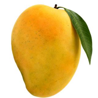 Hindi-Royal Mango