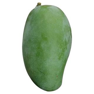 Zebdeya Mango